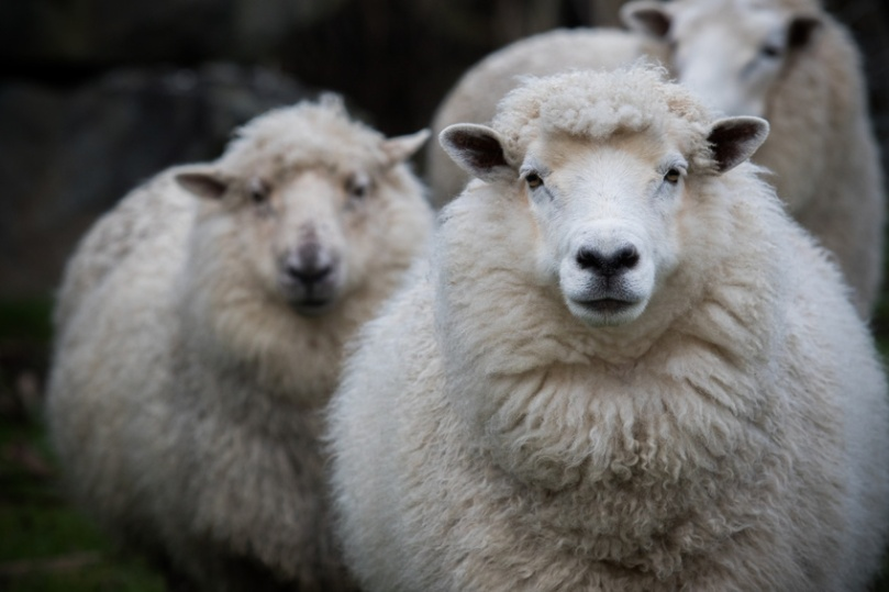Twenty years ago, the first sheep was cloned; there have been huge advances since.